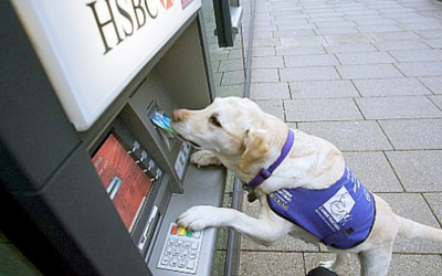 Dog at cashpoint