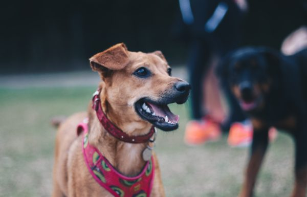 Help Your Pet With the Ultimate Pet Fundraising Guide