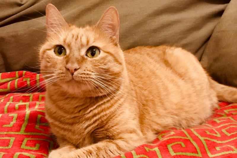 orange cat laying on red blanket
