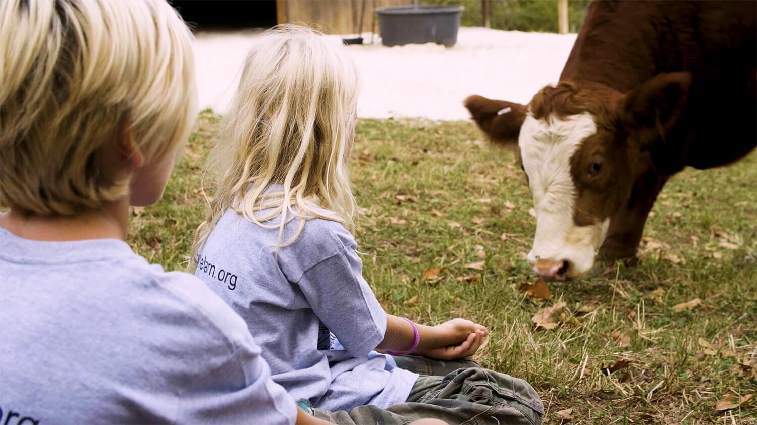 two blond children looking at brown and white cow