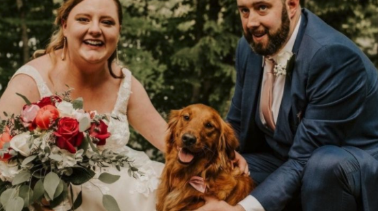 a bride and groom with their golden retriever dog