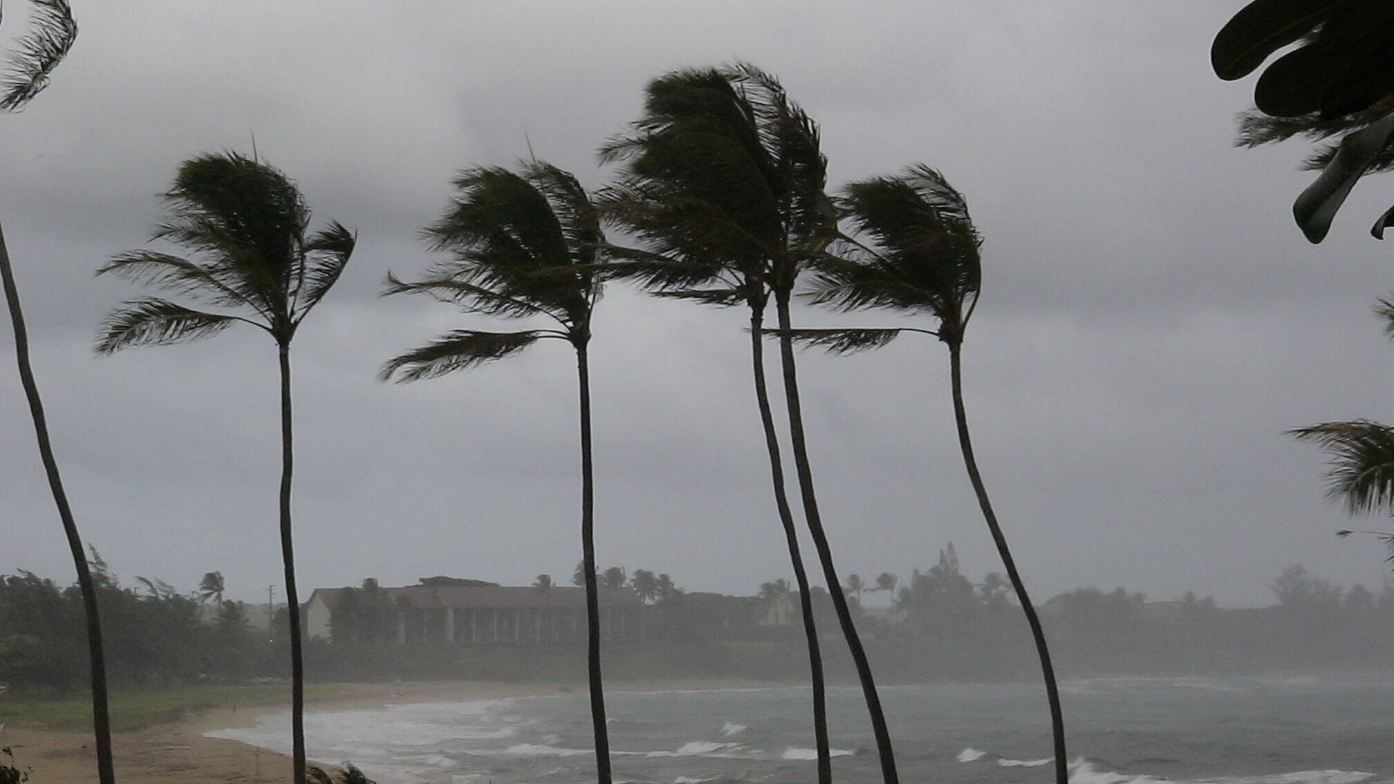Palm trees in Hawaii blowing in a storm
