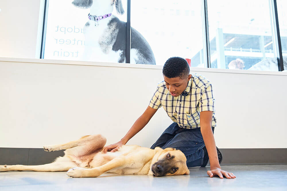 a young man at an animal shelter petting a dog laying on the ground