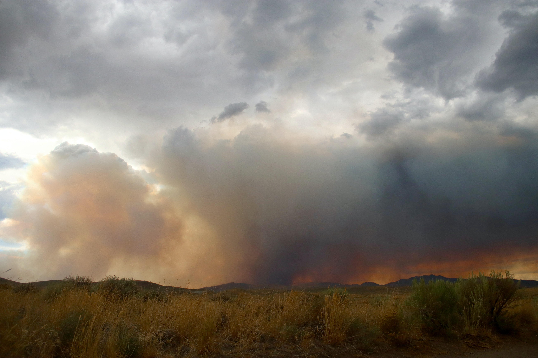 The complete guide to bushfire relief in Australia