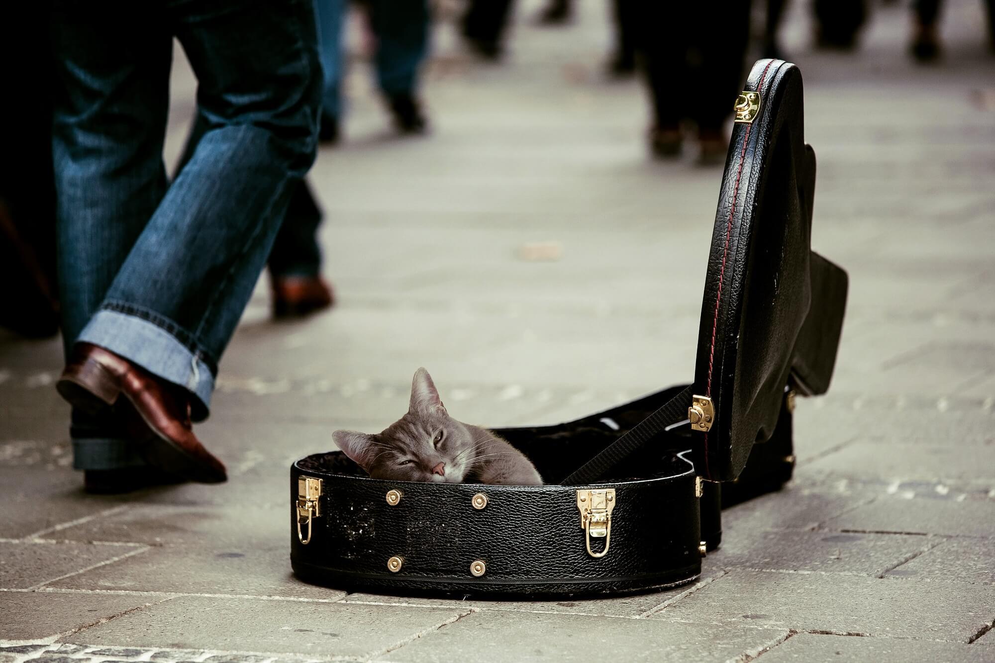 cat in guitar box