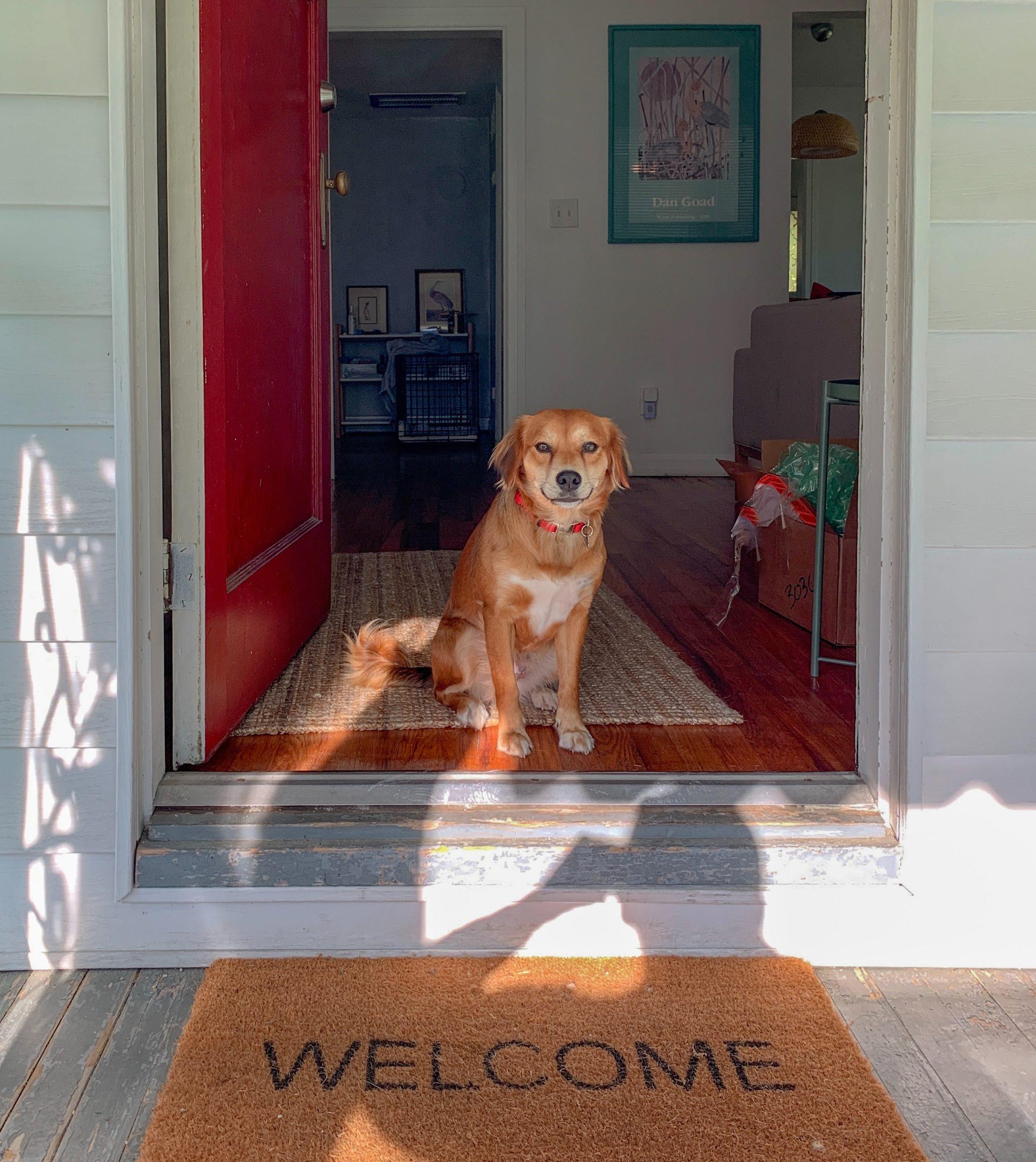 Cane benvenuto a casa