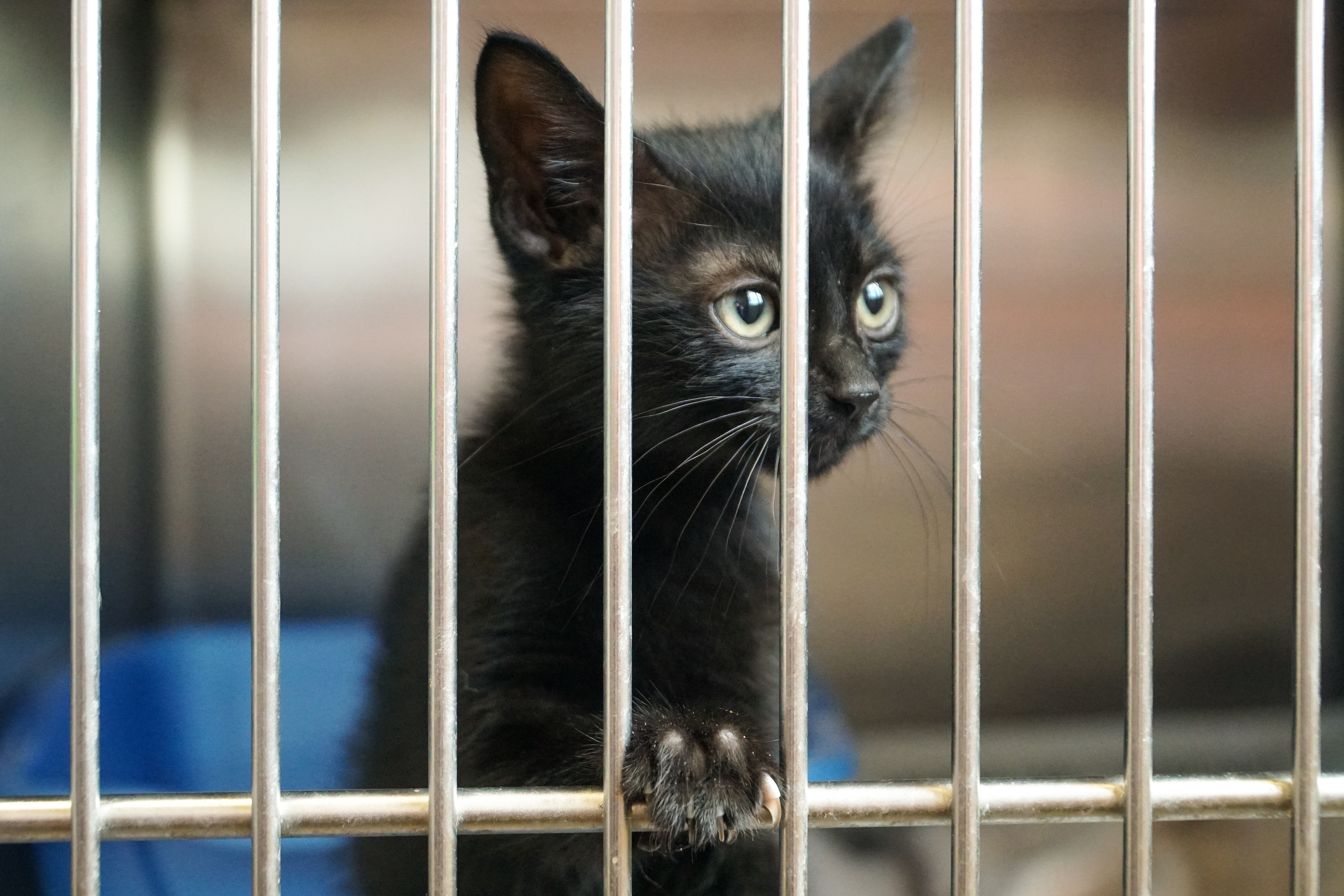A black cat in a cage