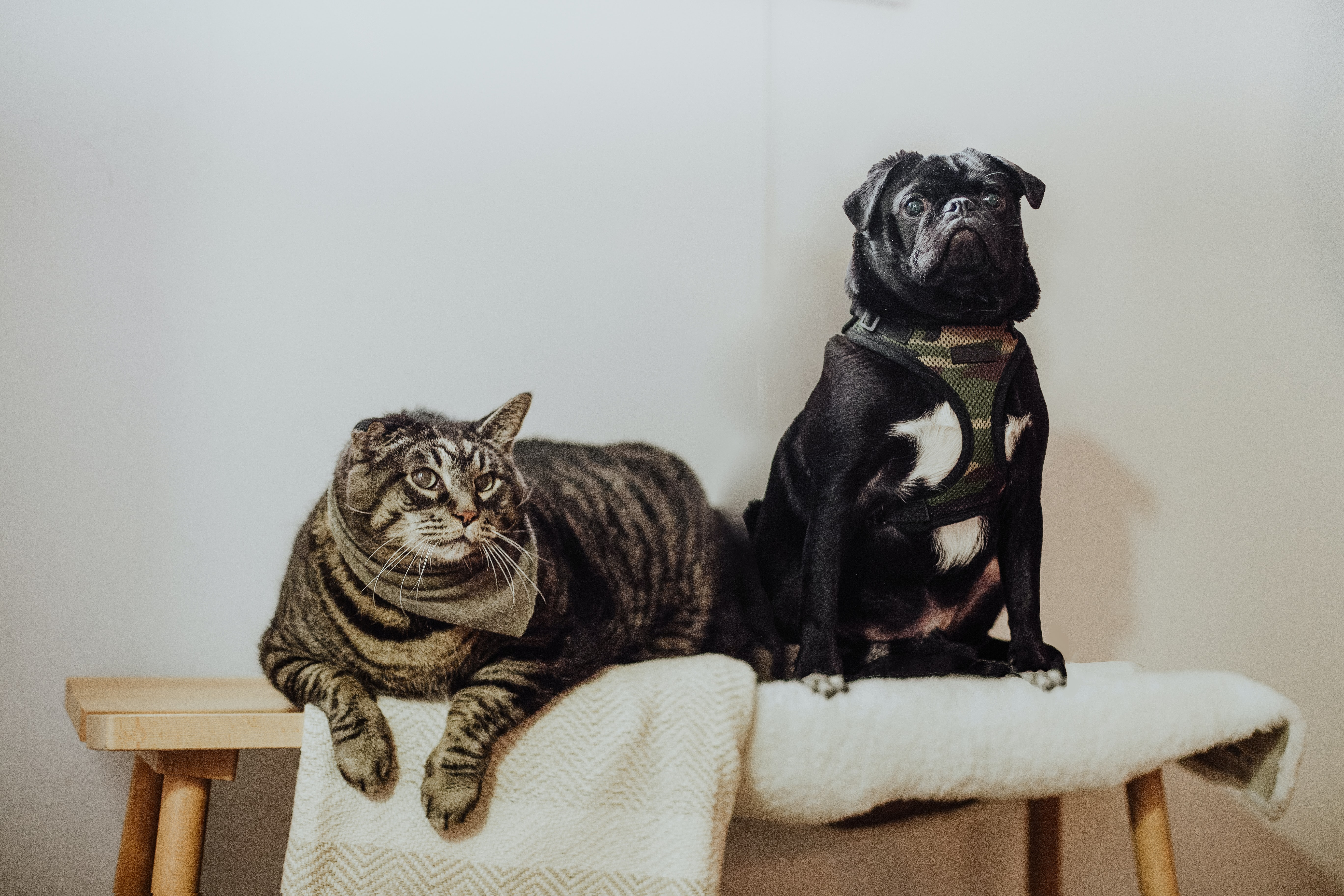 A cat and a dog sit on a stool